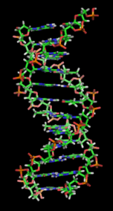 Hey Myriad, if Watson and Crick could share credit for their independent discoveries of DNA, why can't you share with other labs? (Image from Wikipedia)